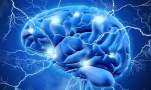 دستیابی به دانش کاشت آرایههای الکترودی در موجودات زنده