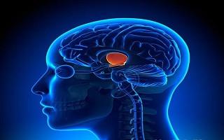 موفقیت محققان کشور در مطالعه مکانیسمهای بینایی و حرکات چشمی