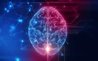 گسترش تعاملات علمی و دانشگاهی در حوزه نقشهبرداری مغز