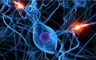 شبیهسازی سهبعدی بافتهای عصبی