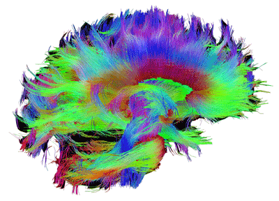 آزمایشگاه ملی نقشه برداری از مغز